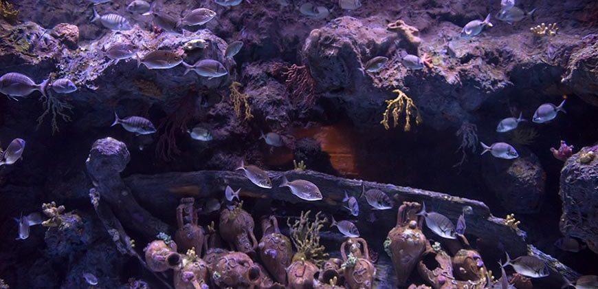 """Aquarium Cap Blanc"""">"""