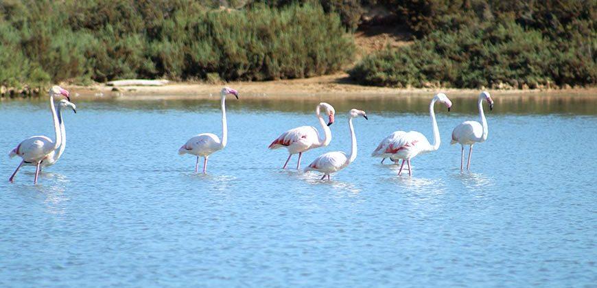 "Las Salinas Natural Park (Ses Salines)"">"